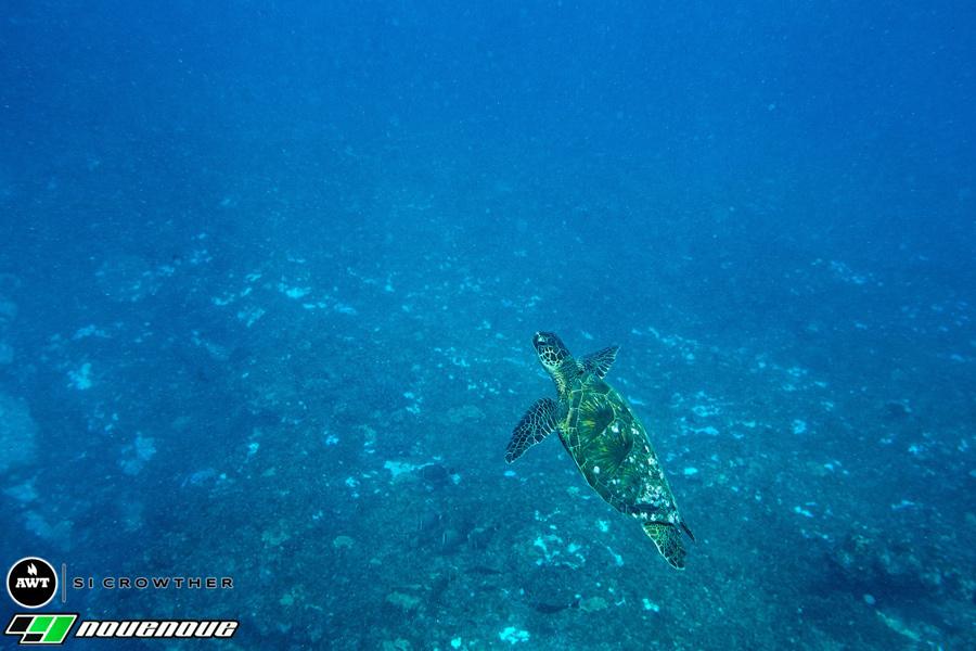 Underwater-Turtle